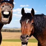 The perils of riding two horses